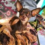 Пропала собака в районе Эльмаша, Екатеринбург