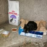 Котенок ищет хозяина, Екатеринбург