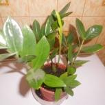 комнатные растения, Екатеринбург