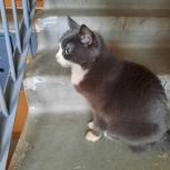 Найден кот/кошка, Екатеринбург