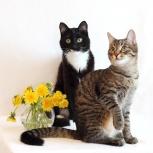 2 кота: полосатый Николай и ч/б Кокос ищут дом, Екатеринбург