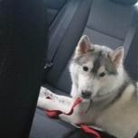 Найдена собака!, Екатеринбург