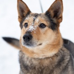 Собака по кличке Фомка ищет хозяина, Екатеринбург