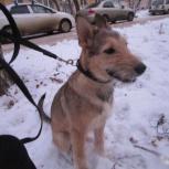 Найден забавный щенок, Екатеринбург
