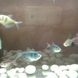 Продаю аквариум и рыб, Екатеринбург