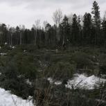 Вырубка кустарника,валка леса, аренда дробилки., Екатеринбург