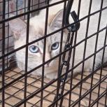 Кошка подросток, Екатеринбург