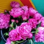 цветы, Екатеринбург