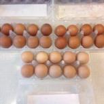 Пищевое куриное яйцо, Екатеринбург