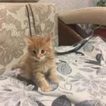 Меин кун котята, Екатеринбург