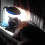 Потерялся кот, Екатеринбург
