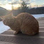 Потерялся рыжий кот, Екатеринбург