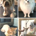 Стрижка собак и кошек в уютном салоне!, Екатеринбург