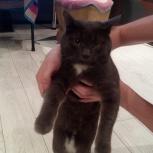 Найдена кошка Амундсена 53, Екатеринбург