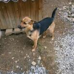 Пропала собака в красном ошейнике, уралмаш, Екатеринбург