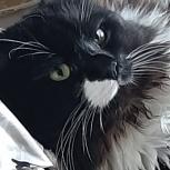 Потерялся кот!!!, Екатеринбург