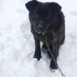 Молодой пёс Грюм, Екатеринбург
