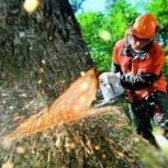 Спил деревьев подрезка, Екатеринбург