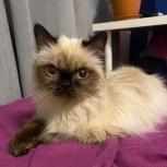 Найдена кошка мкрн.Вторчермет, Екатеринбург