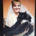 Ищем кота! Екатеринбург и Каменск-Уральский!!, Екатеринбург