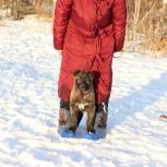 Уютная щенуля Плюша-50 оттенков счастья, в дар, Екатеринбург