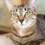 Ищем дом для молодой кошечки Синди, Екатеринбург