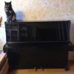 Отдам бесплатно пианино, Екатеринбург
