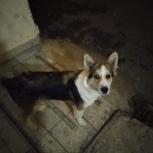 Найдена собака кабель возраст до 1 года, Екатеринбург