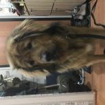 Найдена собака Екатеринбург Эльмаш, Екатеринбург