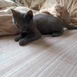 Найден котенок (мальчик), Екатеринбург