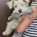 Собака Жужа (1 год) ищет семью, Екатеринбург