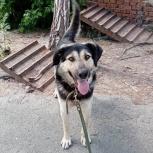 Палкаша - пёс, который скорее хочет обрести дом., Екатеринбург