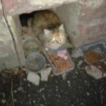 найдена кошка в Пионерском, Екатеринбург