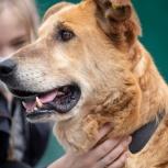 Собака Дора ищет дом, Екатеринбург
