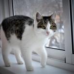 Отдам кошку Кейси. 7 мес, стерилизована., Екатеринбург