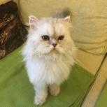 Найден очаровательный домашний кот в районе Елизавет, улица Бисертская, Екатеринбург