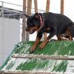 Бытовая дрессировка собак, Екатеринбург