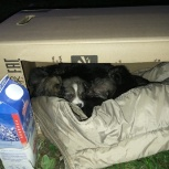 Найдены щенята, Екатеринбург