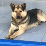 Собака ищет хозяина, Екатеринбург