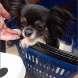 Маленькая собака найдена СТЦ МЕГА на парковке виз, Екатеринбург