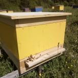 Каркасные ульи для пчел, Екатеринбург
