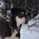 Собака Арчи 7 мес , ищет дом, Екатеринбург
