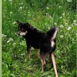 потерялась собака сибу-ину, Екатеринбург
