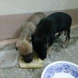 Ищем щенкам хозяев, Екатеринбург