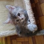 Красивый котенок-девочка ищет заботливых хозяев, Екатеринбург