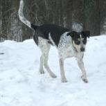 Пропал пес Тобик, Екатеринбург