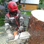 Обрезка, валка, спил деревьев в екатеринбурге и области. Альпинисты, Екатеринбург