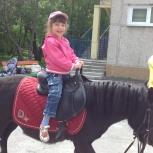 Лошади и пони на заказ, Екатеринбург