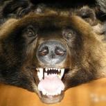 Чучело бурого медведя в виде развернутой шкуры, Екатеринбург