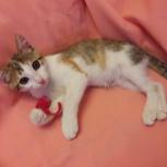 Дусенька кошка, примерно 3 -3,5 месяца  ищет любящие ручки., Екатеринбург